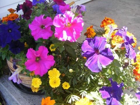 front-yard-flowers3.jpg